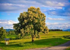 Baum und Alpstein